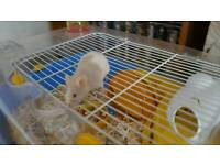 Male mouse free to good home with cage