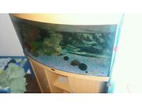 Jewel vision 180 fish tank plus cabinet
