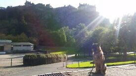 Edindogs - professional dog walker, dog trainer and pet sitter