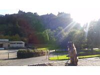 Edindogs - professional dog walker, dog trainer and pet sitter