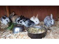 Adorable Babies Bunnies