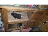 2 rabbits for sale double hutch and food and everything