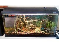 Aquarium with full equipment,fish, ornament and many more
