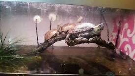 Turtles and everything u need