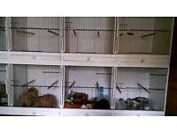 1 bank of 8 finch cages, 8 new nest boxes and feeds