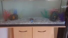 Tank and stand + 2HEATERS +2FILTERS +STONES AND ORNAMENTS AND REAL WOOD. ! BARGAIN !