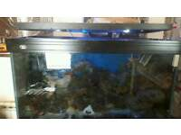 large marine fish tank full set up cheep