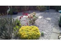 Garden service and Jet washing in Glasgow/Paisley