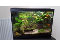 70l. Fish Tank with all accesories