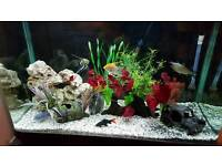 Large fish tank for sale