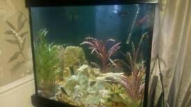 Aqua one cube fish tank and trophues