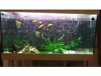 Fish tank 150l all included