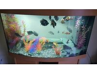 Juwel vision 180 fish tank with built in filter and heater 200 ono
