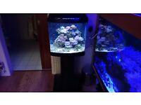 Fish tank Marine nano full setup with coral