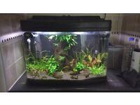 Interpet Fish Pod Glass Aquarium Fish Tank - 64 L + accessories