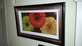 Lovely colourful framed PRINT/PICTURE called Daisy Trio