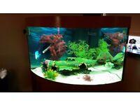 juwel trigon fish tank /Aquarium