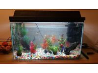 2ft fish tank set up