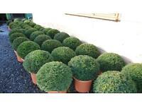 Ball hedging