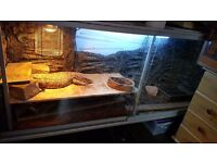 2,5 year old bosc monitor