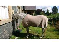 Giving up horses loads for sale