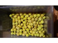 124 Yellow golf balls