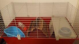 Large cage guinea pig rabbit