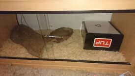 Corn snake plus all items in pics