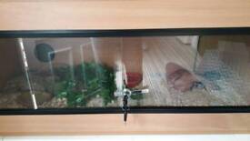 Corn snake with complete set up