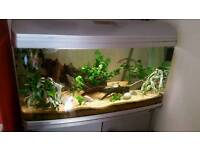Large 4 foot 215 liter fish tank and stand