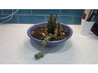Free Succulents to Good Home