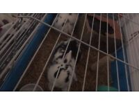 2 bunnies looking for a forever home