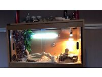 Vivarium with Bearded Dragon and Accessories