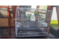 Lovely budgie for sale with cage only £25