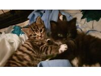 2 gorgeous kittens looking for homes