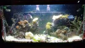 Marine tank full set up and fish