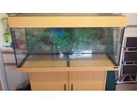 Juwel Rio 180 Aquarium