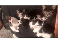 Stunning fluffy kittens ONLY 3 LEFT