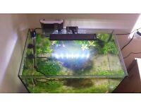 Freshwater shrimp aquarium for sale