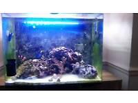 Marine fish tank.
