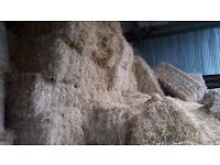 Straw & Hay For Sale