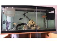 3.3ft fishtank( and stand) with 12 African cichlids