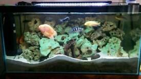 Breaking down fish tank