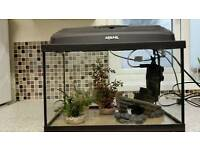Fish tank with filter & accessories
