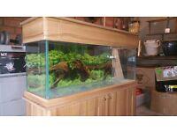 4ft Seashell Aquarium and Oak Cabinet & Hood For Sale
