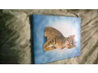 cat canvas picture