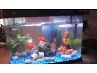 Fish tank light and filter