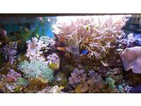 Huge coral for sale