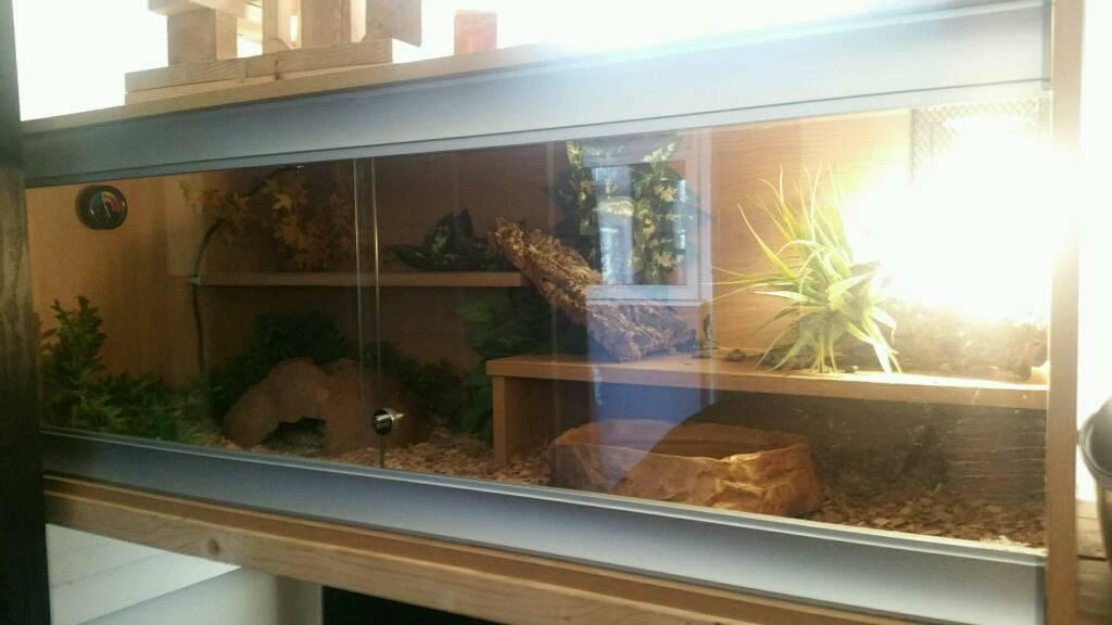 Florida king snake with viv