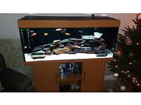 Juwel Rio 240 Aquarium with heater , cabinet and Fluval 405 filter